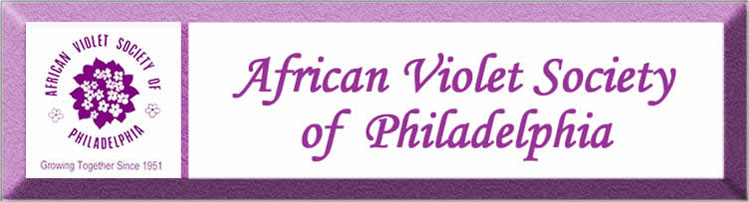 african violet club of philadelphia